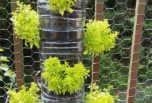 Photo of How to Make a Vertical Garden