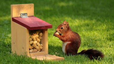 Photo of How to Keep Squirrels Out of The Garden