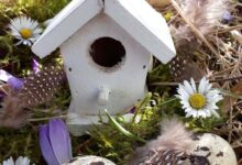 Photo of How to Create a Fairy Garden Outdoors